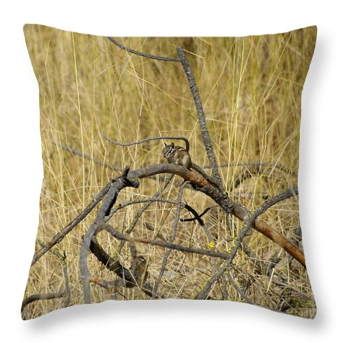 Chipmunks Throw Pillow featuring the photograph Chipmunk In The Sun by Ben Upham III