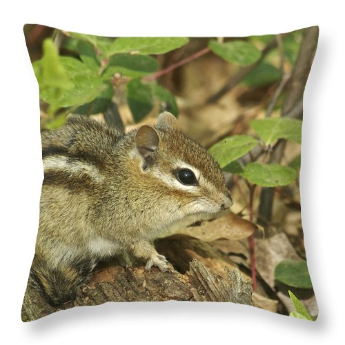 Chipmunk Throw Pillow featuring the photograph Chipmunk by Michael Peychich