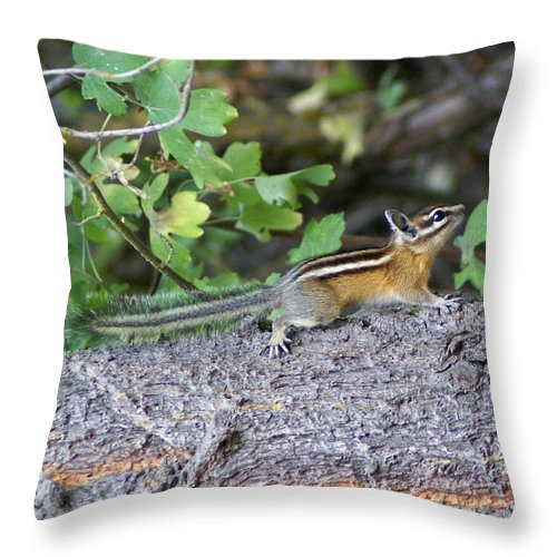 Chipmunks Throw Pillow featuring the photograph Chipmunk On A Log by Ben Upham III