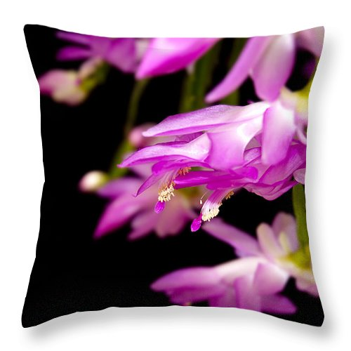 Christmas Cactus Throw Pillow featuring the photograph Christmas Cactus by Carolyn Marshall
