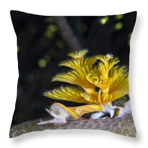 Raja Ampat Throw Pillow featuring the photograph Christmas Tree Worm In Raja Ampat by Todd Winner
