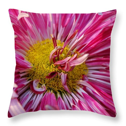 Flower Throw Pillow featuring the photograph Chyrsanthemum Macro by Pravine Chester