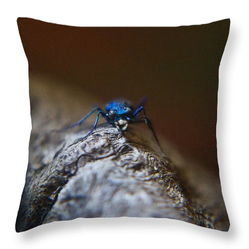 Insecta Throw Pillow featuring the photograph Cicindellidae Face To Face by Douglas Barnett