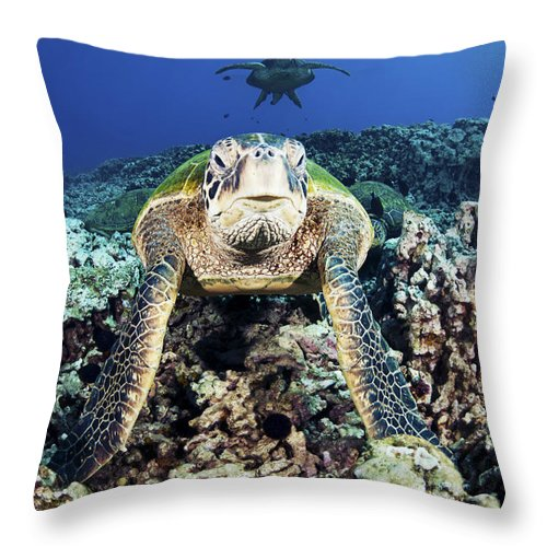 Art Throw Pillow featuring the photograph Cleaning Station Iv by Dave Fleetham - Printscapes