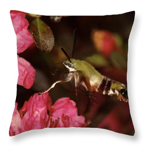 Moth Throw Pillow featuring the photograph Clear Wing Hummingbird Moth 1 by Lara Ellis