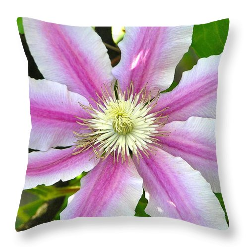 Macro Throw Pillow featuring the photograph Clematis Blossom by Constance Sanders