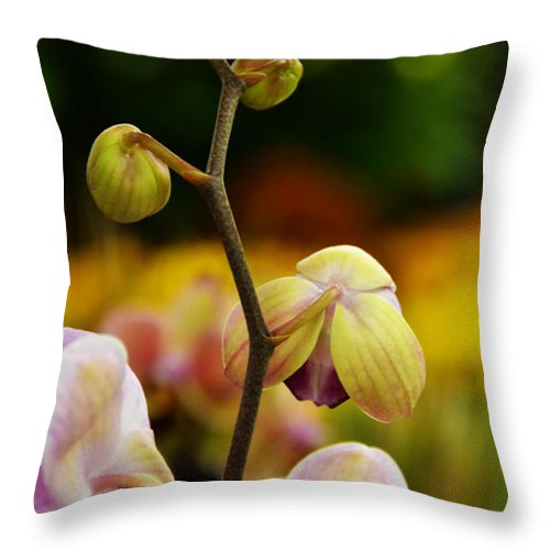 Flowers Throw Pillow featuring the photograph Climbing Slowly by Angelina Vick