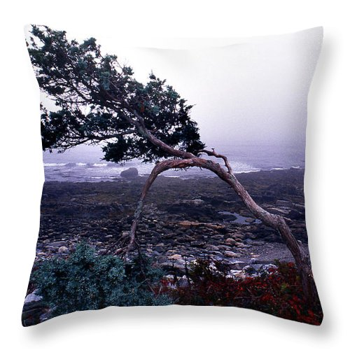 Pine Throw Pillow featuring the photograph Clinging On by Skip Willits