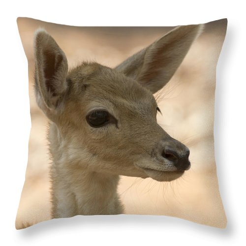 Juvenile Deer Throw Pillow featuring the photograph Close-up by Douglas Barnard