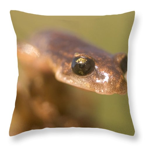 Photography Throw Pillow featuring the photograph Close Up Of A California Newt Standing by Phil Schermeister