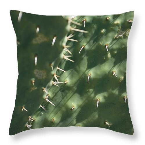 North America Throw Pillow featuring the photograph Close-up Of A Prickly Pear Cactus by Todd Gipstein