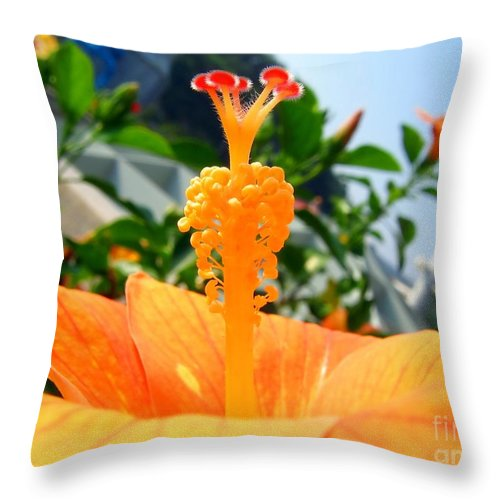 Rose Throw Pillow featuring the photograph Close Up Of A Rose Mallow by Yali Shi