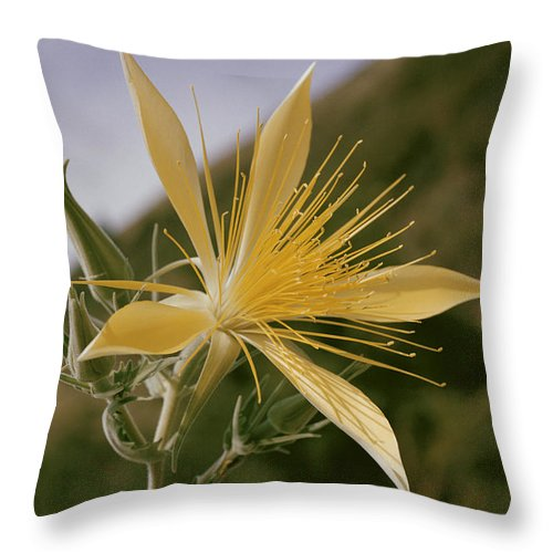nez Perce National Forest Throw Pillow featuring the photograph Close-up View Of A Blazing Star by B. Anthony Stewart