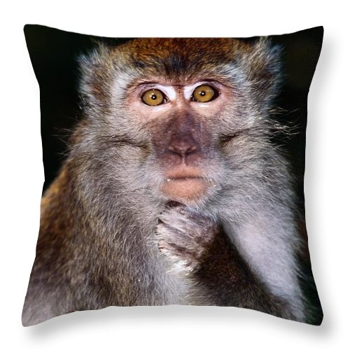 Borneo Island Throw Pillow featuring the photograph Close View Of A Long-tailed Macaque by Mattias Klum