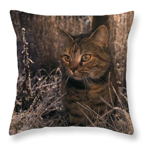 Animals Throw Pillow featuring the photograph Close View Of A Tabby Cat by Medford Taylor