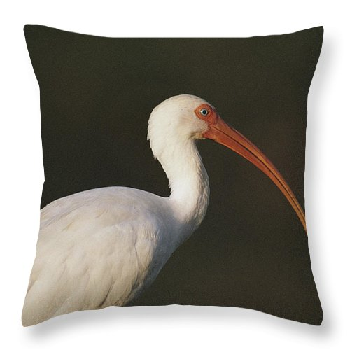 Animals Throw Pillow featuring the photograph Close View Of A White Ibis by Joel Sartore