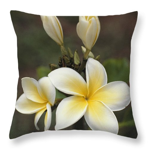 Plants Throw Pillow featuring the photograph Close View Of Frangipani Flowers by Ira Block