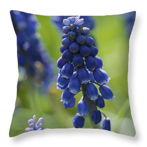 Scenes And Views Throw Pillow featuring the photograph Close View Of Grape Hyacinth Flowers by Darlyne A. Murawski