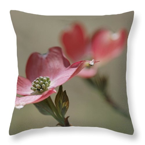 Plants Throw Pillow featuring the photograph Close View Of Pink Dogwood Blossoms by Darlyne A. Murawski