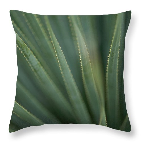 North America Throw Pillow featuring the photograph Close View Of The Leaves Of A Sotol by Annie Griffiths