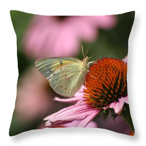 Butterfly Throw Pillow featuring the photograph Clouded Sulphur by Living Color Photography Lorraine Lynch