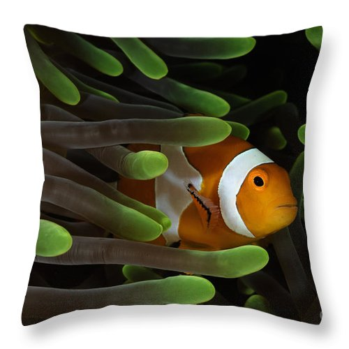 Anemone Throw Pillow featuring the photograph Clownfish In Green Anemone, Indonesia by Todd Winner