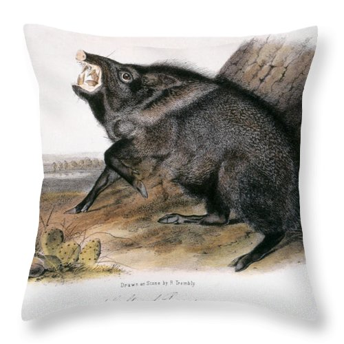 1846 Throw Pillow featuring the photograph Collared Peccary, 1846 by Granger