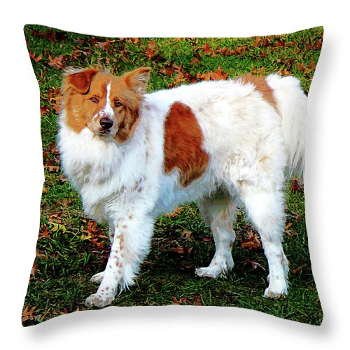 Dog Throw Pillow featuring the photograph Collie On Lawn by Susan Savad