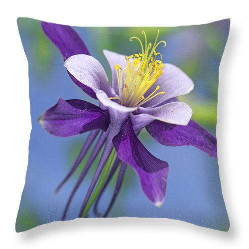 00176669 Throw Pillow featuring the photograph Colorado Blue Columbine Close by Tim Fitzharris