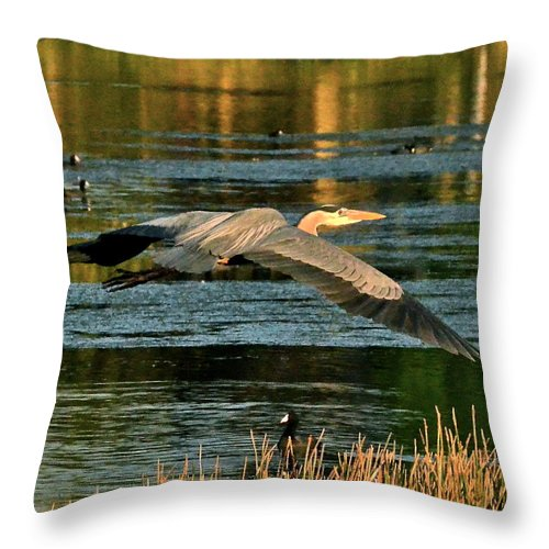 Heron Throw Pillow featuring the photograph Colorful Evening Flight by Carol Bradley