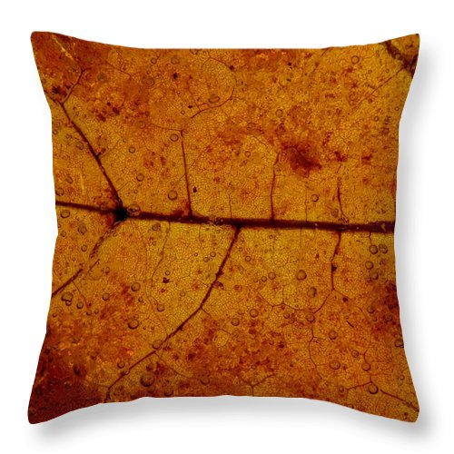 Autumnal Throw Pillow featuring the photograph Colors Of Nature 4 by Sami Tiainen