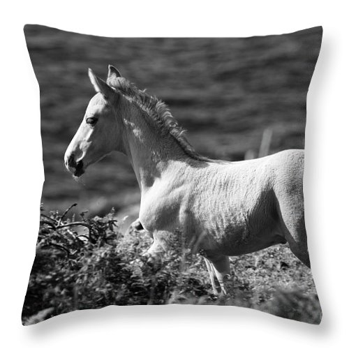Horse Throw Pillow featuring the photograph Colt by Aidan Moran