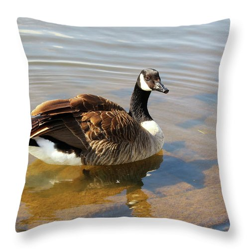 Goose Throw Pillow featuring the photograph Coming On Shore by Rachel Cohen