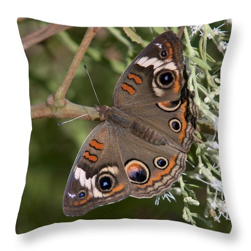 Marsh Throw Pillow featuring the photograph Common Buckeye Butterfly Din182 by Gerry Gantt