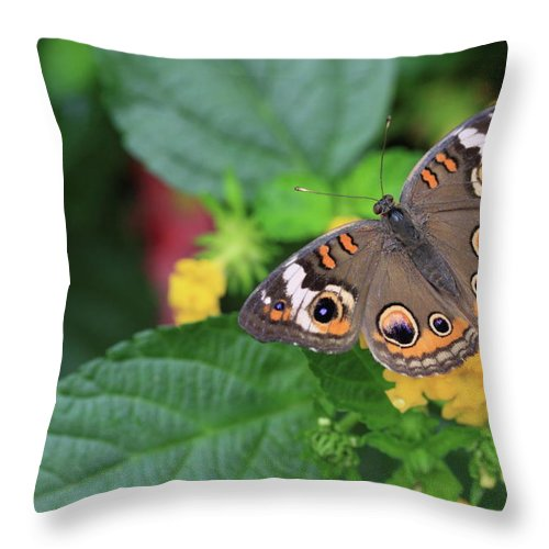 Flowers Throw Pillow featuring the photograph Common Buckeye II by Rick Berk