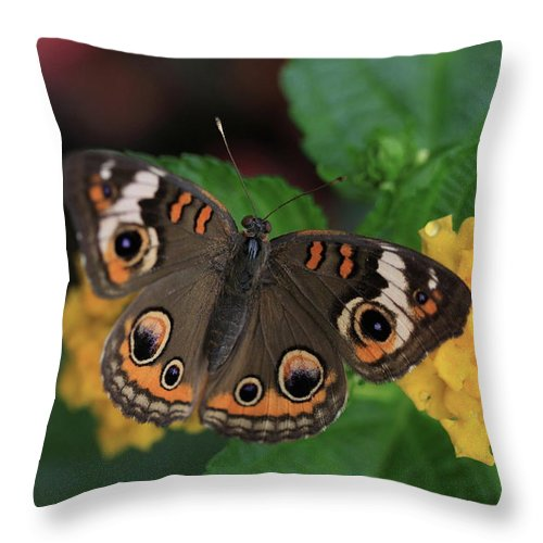 Butterfly Throw Pillow featuring the photograph Common Buckeye by Rick Berk