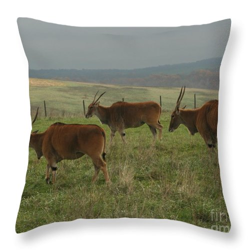 Wildlife Throw Pillow featuring the photograph Common Eland 3 by Dawn Downour