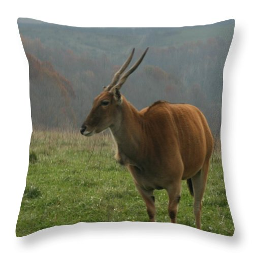Wildlife Throw Pillow featuring the digital art Common Eland by Dawn Downour