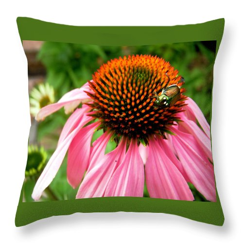 Flower Throw Pillow featuring the photograph Cone Flower And Guest by Stephanie Moore