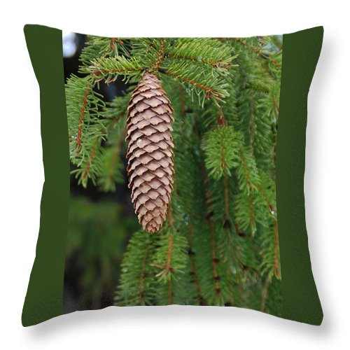 Tree Throw Pillow featuring the photograph Cone by Guy Whiteley