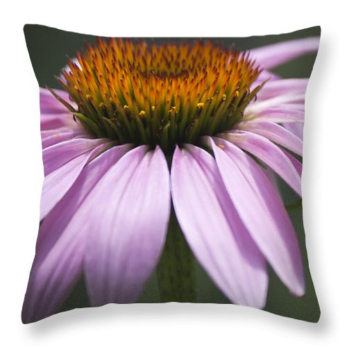 Coneflower Throw Pillow featuring the photograph Coneflower Visitor by Teresa Mucha