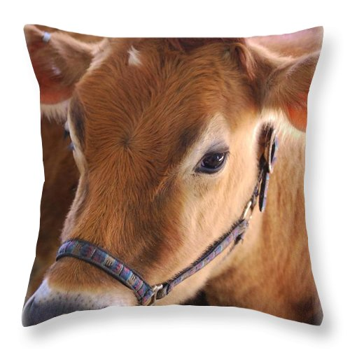 Cow Throw Pillow featuring the photograph Contentment by Judy Hall-Folde