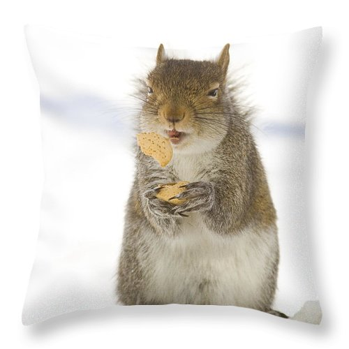 Squirrel Throw Pillow featuring the photograph Cookie Squirrel by Marty Maynard