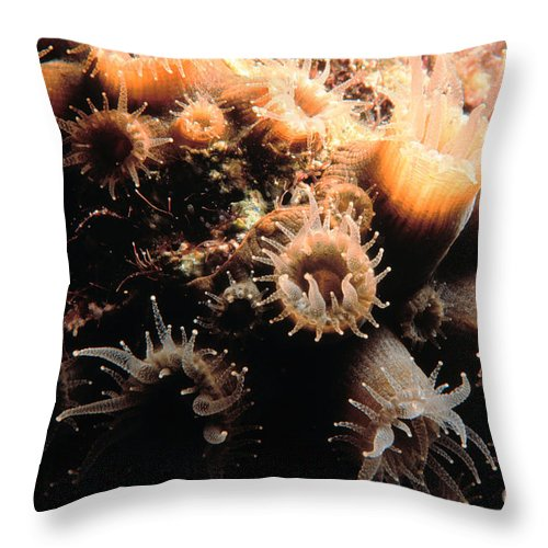 Coral Throw Pillow featuring the photograph Coral Feeding 5 by Mike Nellums