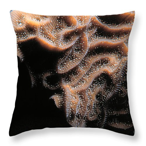 Coral Life Throw Pillow featuring the photograph Coral Life by Mike Nellums