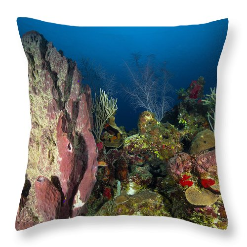 Sea Life Throw Pillow featuring the photograph Coral Reef And Sponges, Belize by Todd Winner