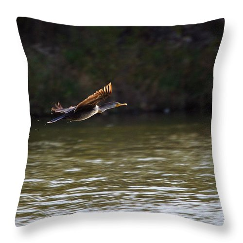 Bird Throw Pillow featuring the photograph Cormorant Flight Series - 1 by Roy Williams