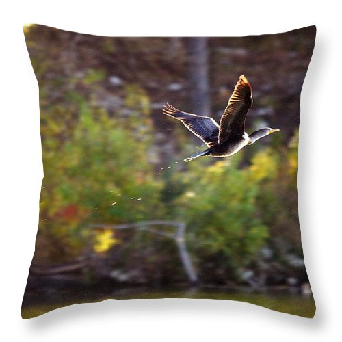Bird Throw Pillow featuring the photograph Cormorant Flight Series - 2 by Roy Williams