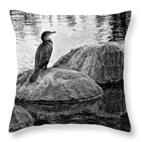 Cormorant Throw Pillow featuring the photograph Cormorant On Rocks by Jim Moore