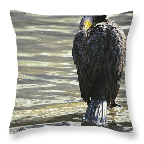 Bird Throw Pillow featuring the photograph Cormorant Portrait In Shallow Water by Roy Williams